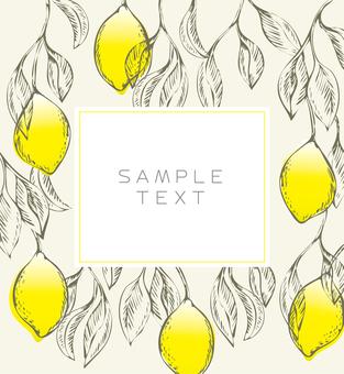 018 레몬