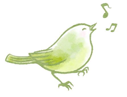 노래하는 꾀꼬리