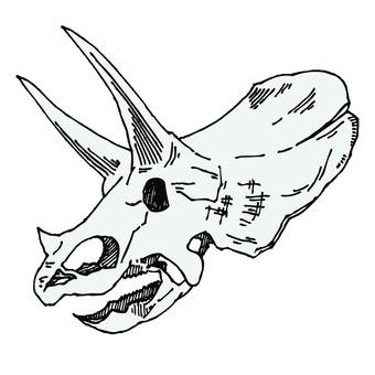 三角龍的化石