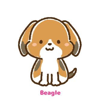 Beagle front