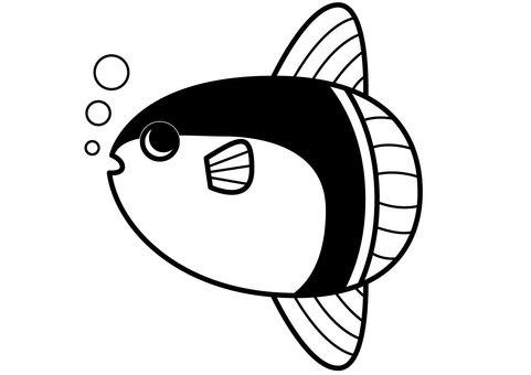 Sunfish 1c