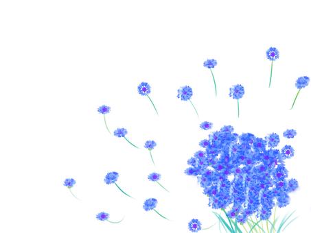 수레 국화 꽃다발