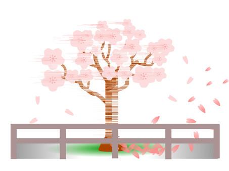跳舞在春天的街道樹櫻花在花瓣跳舞