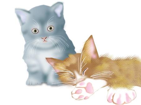 Kittens 01