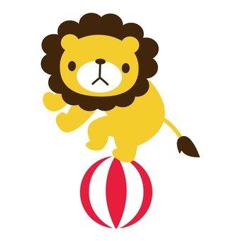 Circus Lion 3