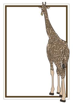 The back of the giraffe