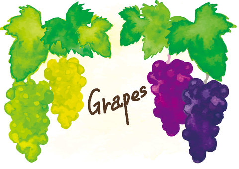 """Watercolor style"" grape"