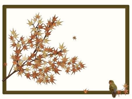 Momiji②棕褐色