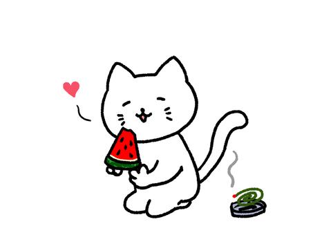 Cat eating watermelon