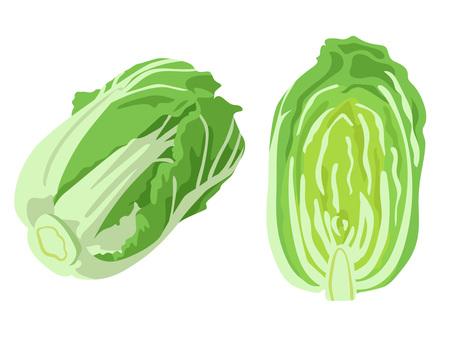 Ingredients _ vegetables _ cabbage _ no wire