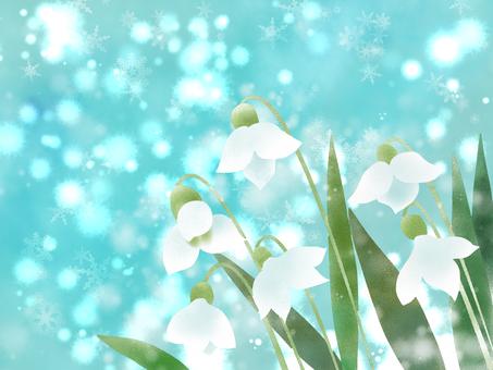 Snowdrop (snow grass) Snow sky