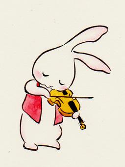 Violin Usagi 17