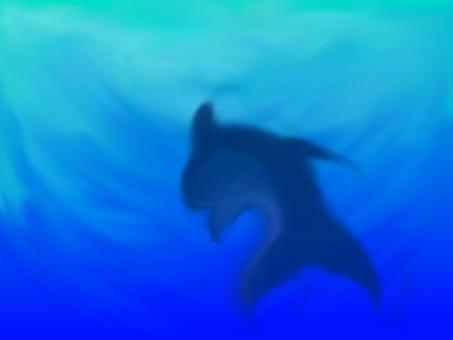 바다와 상어