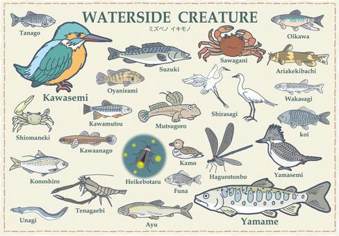 水辺の生き物 イラスト