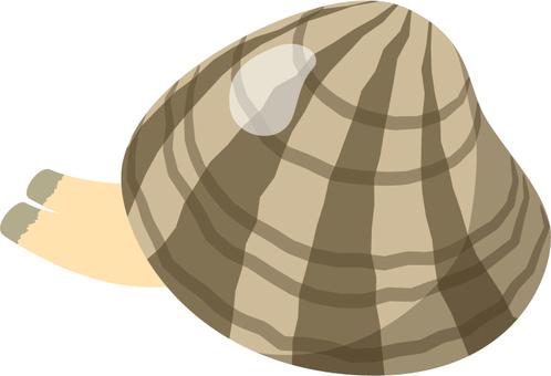 Clam cloth _ Salt removal