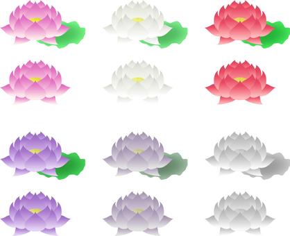 Lotus _6 color