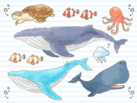 海洋生物圖