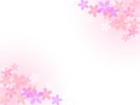 Cherry blossom background 02
