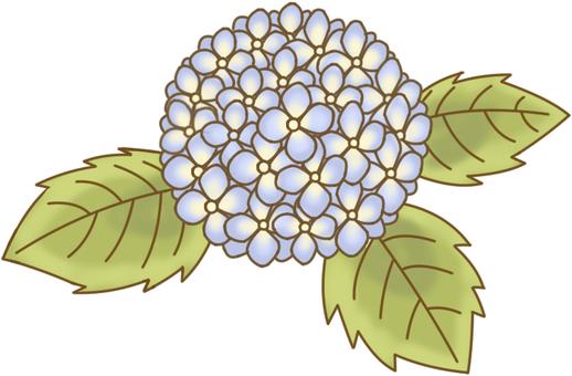 AS plant hydrangea 3 flower color 1 leaf color 2