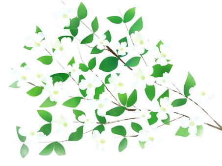 花水樹背景白色