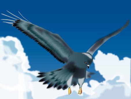 독수리 09