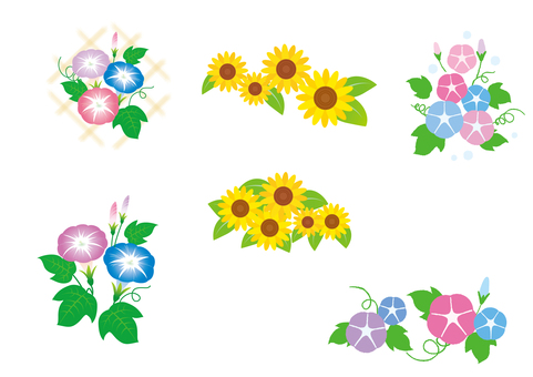 Morning glory Sunflower