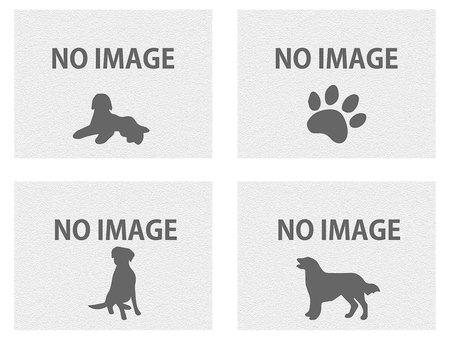 noimage image dog 6