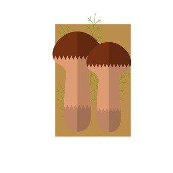 송이 버섯 2