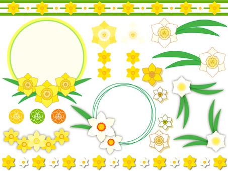 Narcissus 02