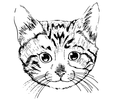 Cat - Line drawing 1