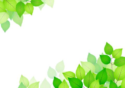 Fresh green material 189