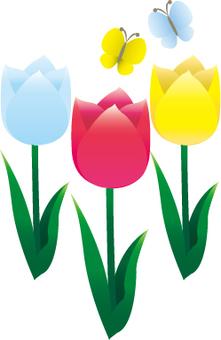 Serious tulip