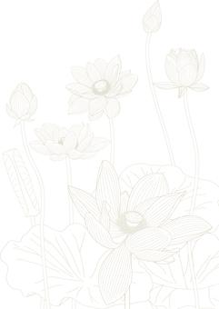 Coloring lotus lotus
