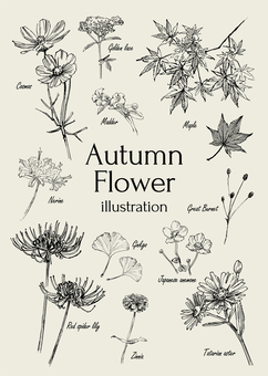 Autumn flower illustration