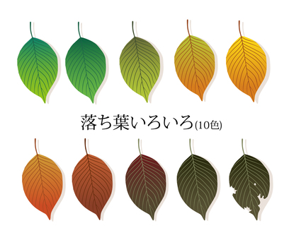 Variety of fallen leaves 10 colors