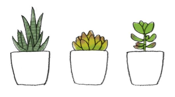 多汁的植物