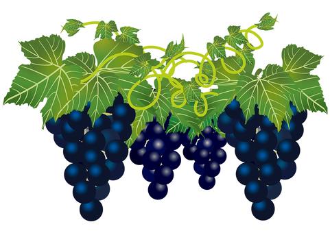 Delicious grape 19