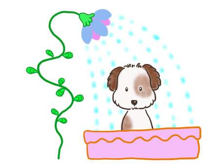 Shower dog 2