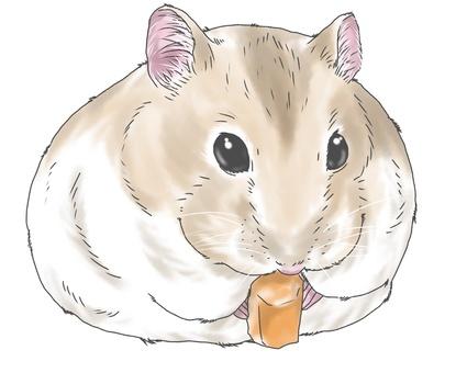 Jungarian hamster