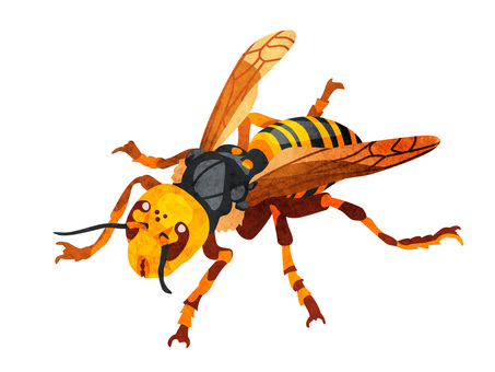 Animal_Insect_Wasp_Watercolor