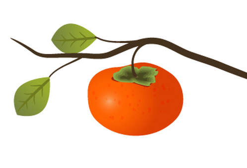 Illustration of a persimmon tree branch
