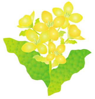 접시의 꽃 Ⅰ