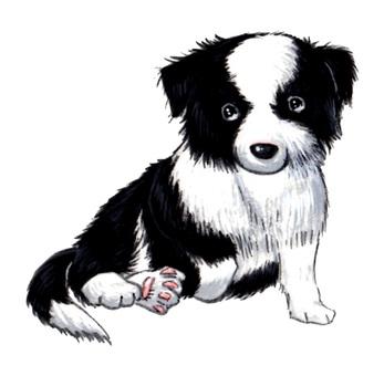 Border Collie's puppy