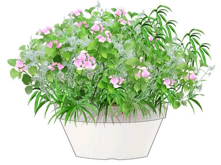 Planting hydrangeas