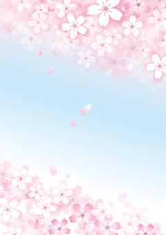 Sakura 31