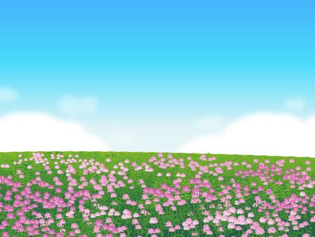 Plants of a flower of grass plains Grassland scenery 04
