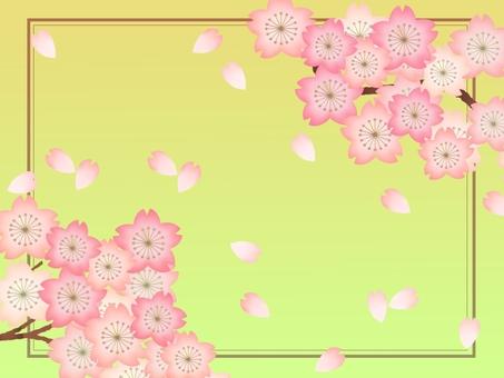 Cherry tree ②