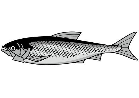 Salmon 2c