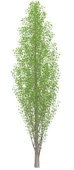 Trees _0003_02