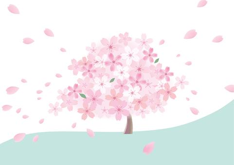 Sakura 48